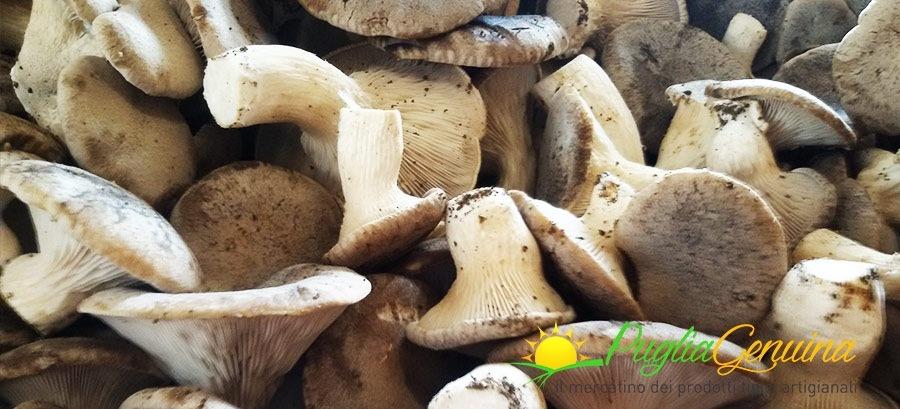 Scopriamo le numerose qualità dei funghi cardoncelli freschi