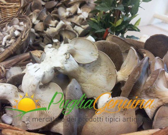 Funghi cardoncelli freschi