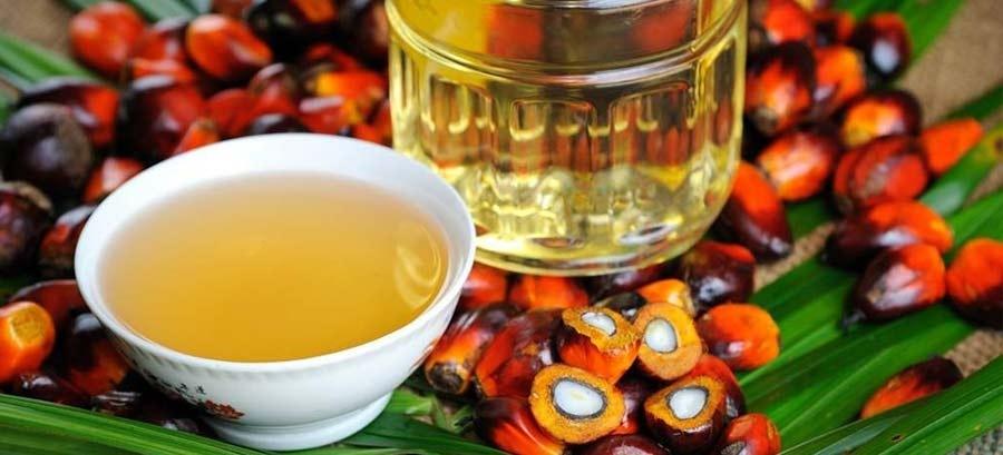Olio di palma, non solo dannoso per la salute…